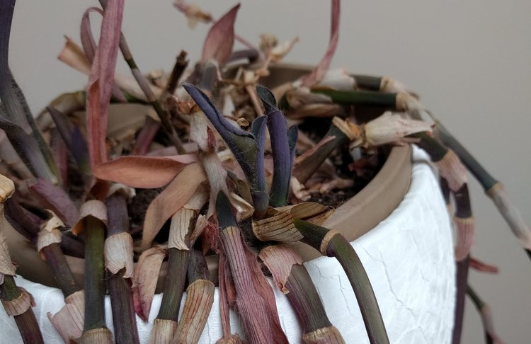 See how there is branching near the base of the stems. It indicates that the overall plant is still in good health.