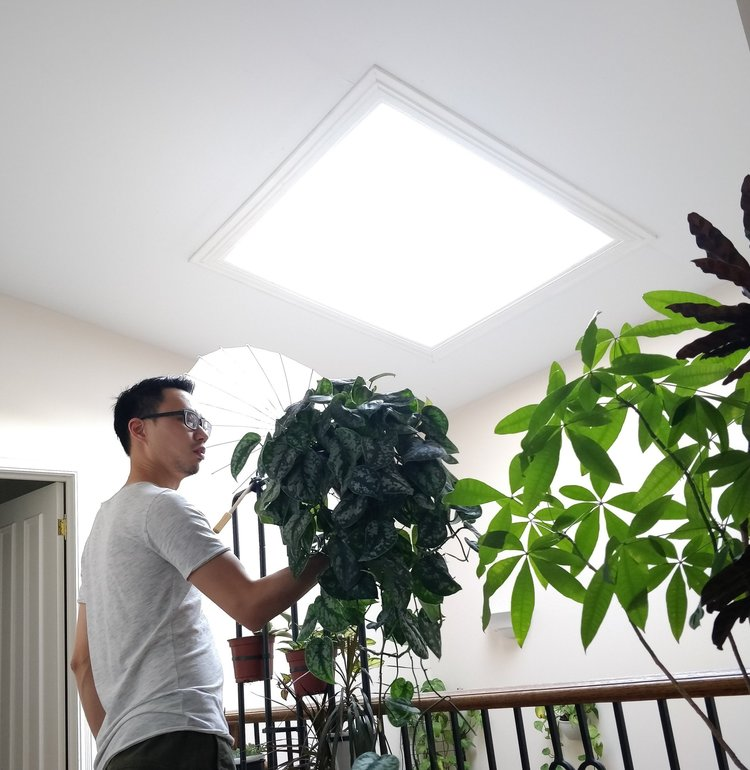 The plants always grew nicely at my parents' house because of the skylights. I merely watered them at the right time. Without those skylights, House Plant Journal might not have ever been created.