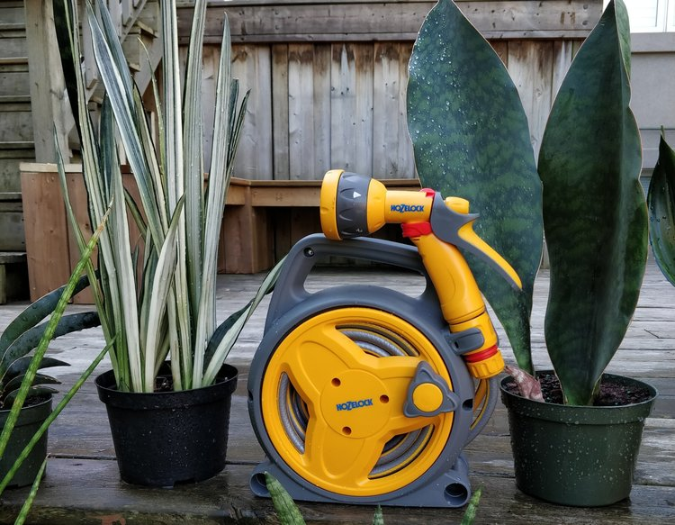 """To give you a sense of 'compactness', here's the Hozelock Pico Reel next to a pair of snake plants in 6"""" pots."""