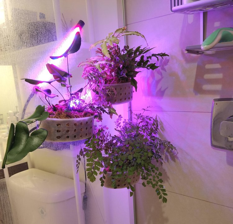 LED Lighting: because of the shower glass, I could safely position the LED light on the outside of the shower and still deliver light to the plants on the inside.