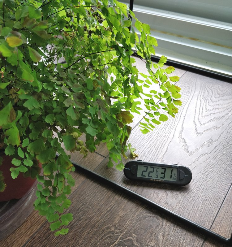 "My maidenhair fern has grown just fine at supposedly ""low humidity"" because the other, more important factors for growth (namely light and soil moisture) were optimal."