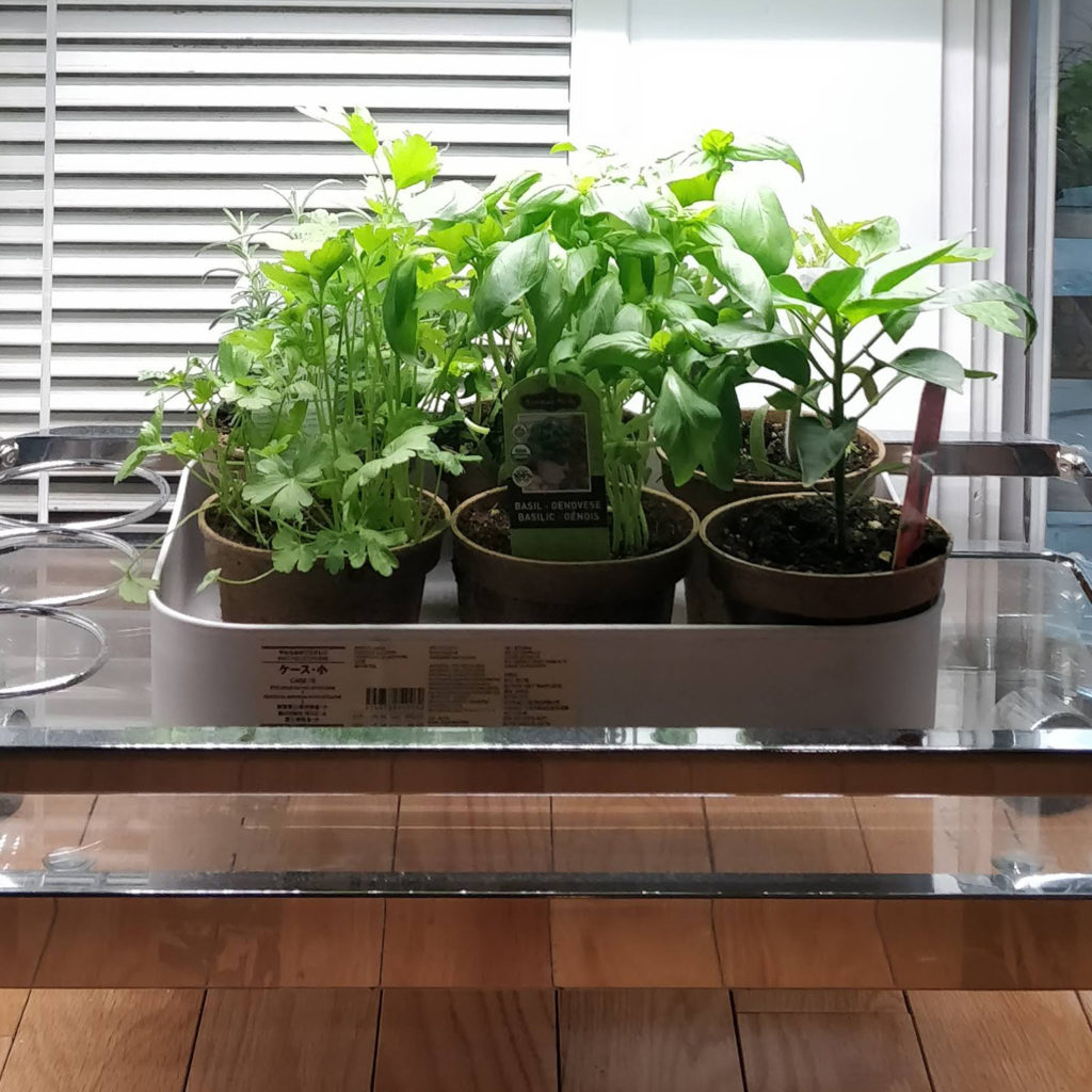 Bar Cart Grow Op Active Grow Led Review House Plant Journal